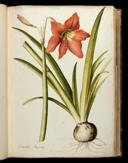 Karlsruher Blumenbuch K 3301